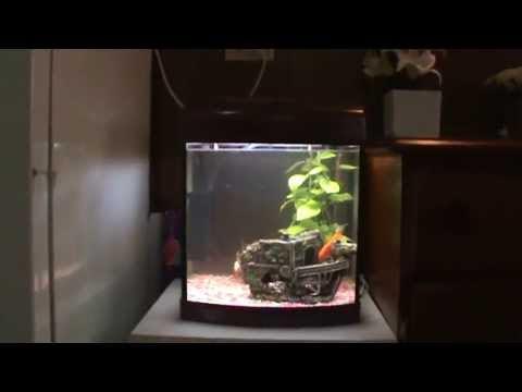 DIY: Home Micro Aquaponics