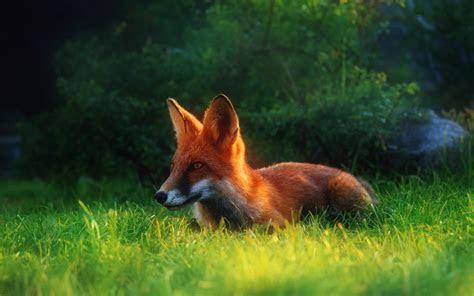 wildlife backgrounds  desktop wallpapertag