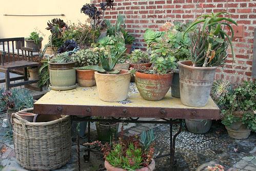 venice side garden