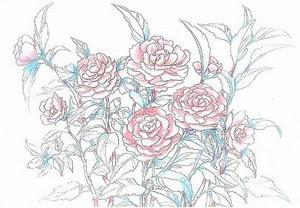塗り絵で癒し 風景画 花の絵 2013年1月