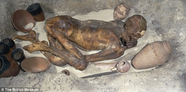 The Gebelein Man, also known as Ginger for his red hair, a 5,500-year-old mummy displayed in the British Museum. Researchers have found a wound on his back was caused by his murderer
