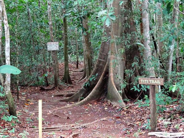 Upper Entrance to Titi Trail