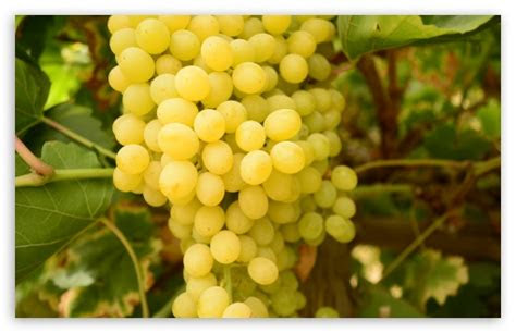 grapes  hd desktop wallpaper   ultra hd tv wide