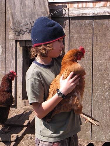 chicken 5