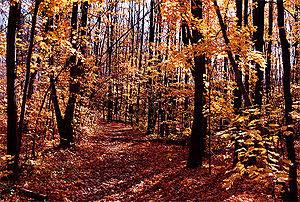 Bruce Trail - Halton, Ontario, Canada - http:/...