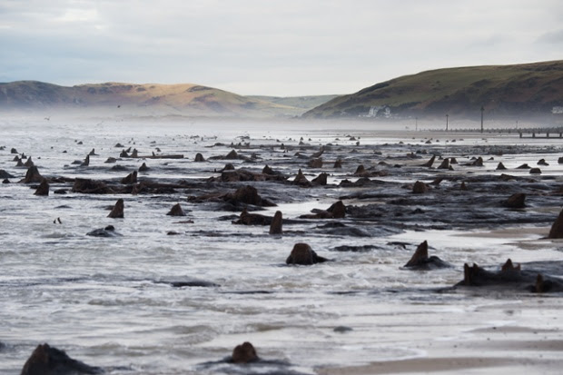 The recent huge storms and gale force winds that have battered the coast of West Wales have stripped away much of the sand from stretches of the beach between Borth and Ynyslas.