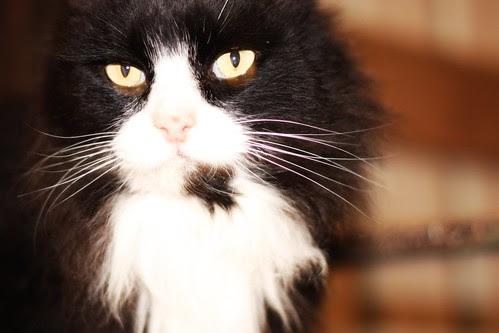 miss kitty 2