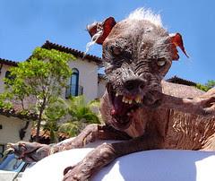 Ugliest dog