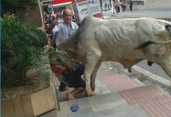 Boi atacou pedrestes em ruas do centro da cidade de Cachoeiro. (Foto: Reprodução/TV Gazeta)