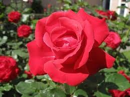 Contoh Bunga Sempurna Dan Bunga Tidak Sempurna Temukan Contoh