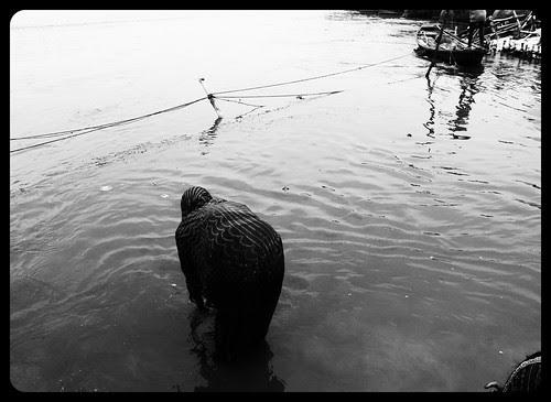 `Bharat ke liye bhagwan ka ek vardaan hai ganga by firoze shakir photographerno1