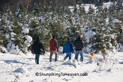 Searching for a Christmas Tree at Summers Christmas Tree Farm