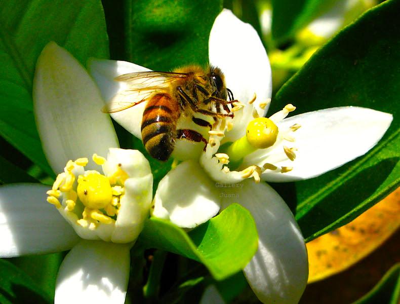 Bee I April 2011