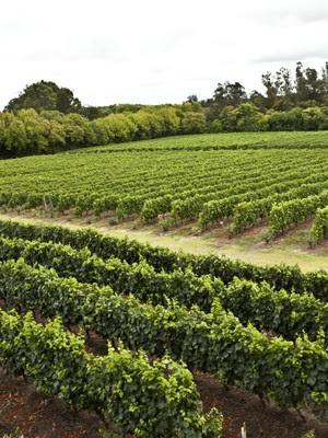 Vinícola por onde a família passou no Uruguai, varginha (Foto: Pedro Henrique Barros/Wine World Adventure)