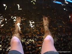 礁溪溫泉魚