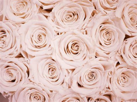roses photo  biel morro atbielmorro  unsplash