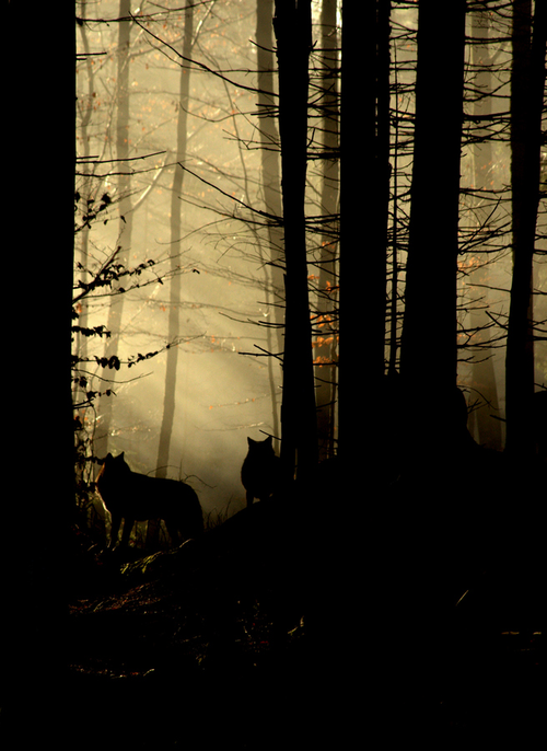 quiet-hippie: THE WOLVES ARE GATHERING. THEY KNOW SOMETHING BAD IS ABOUT TO HAPPEN. THE DEAD ARE COMING. THEY ARE COMING FOR YOU.