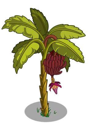 belajar  pohon pisang   icons  png