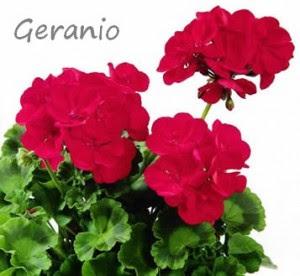 piante antizanzare per terrazzo e giardino,piante anti zanzare, citronella, geranio, rosmarino,lavanda,citronella,calendula,eucalipto,