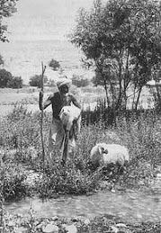 A 1900 Baloch Shepherd