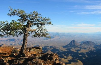 Animal Pictures National on Big Bend National Park Travel Guide   Wikitravel