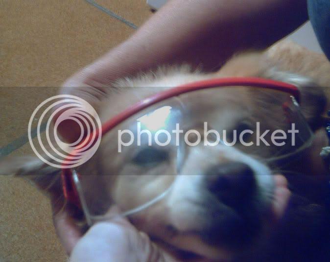 Odie con gafas