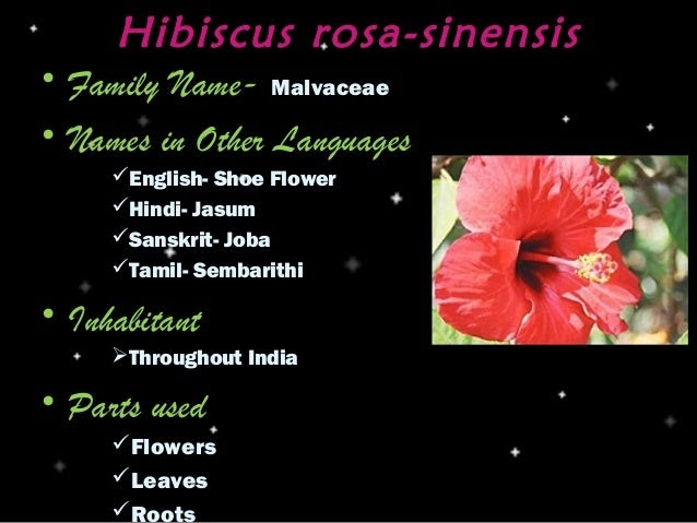 Flowers Name 25 New Shoe Flower In Hindi Language
