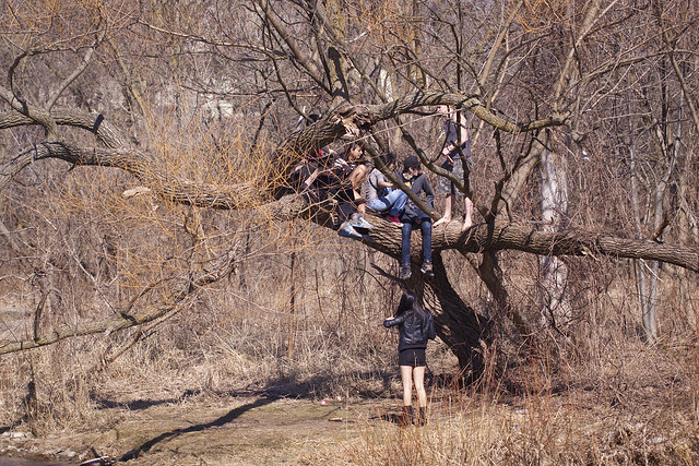 trouble in a tree
