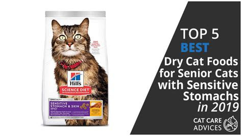 top   dry cat foods  senior cats  sensitive