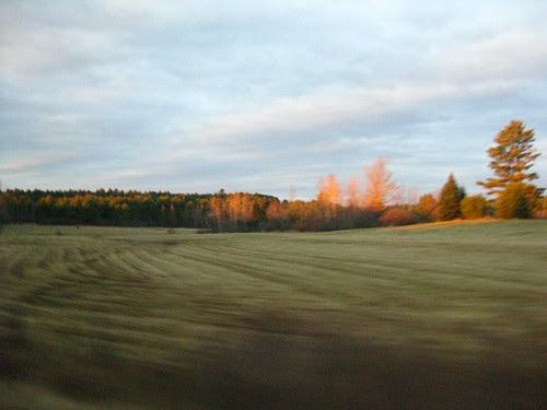 sunlight/ scenery