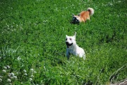 Aprenda o porque o seu  cachorro come grama?