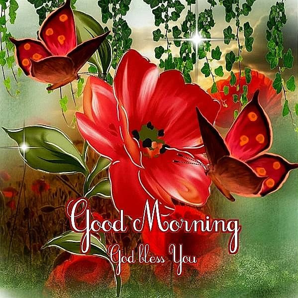 Good Morning God Bless You Flowers Pictures Photos And Images For