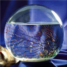 Fish Aquarium Ideal's on Pinterest