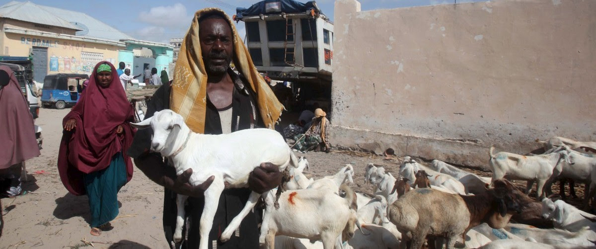 A trader carries his goat to a livestock market ahead of the Eid al-Adha festival in Somalia