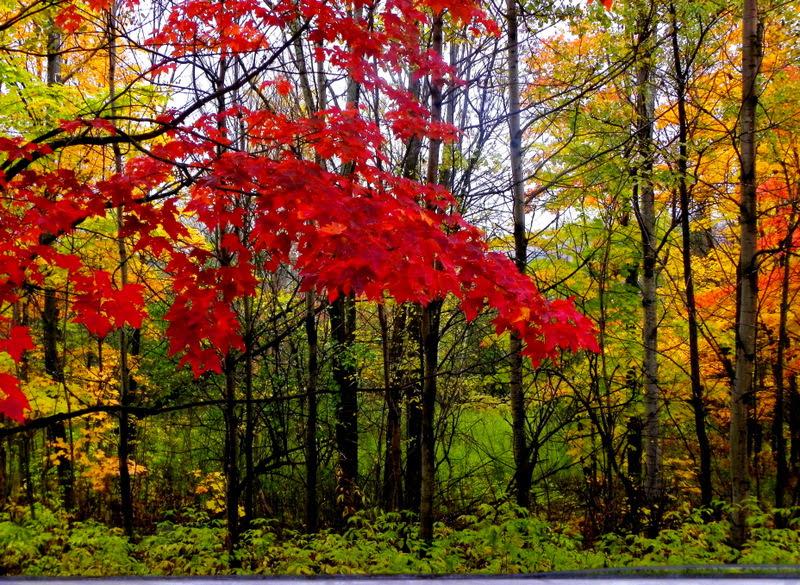 Quebec Autumn II