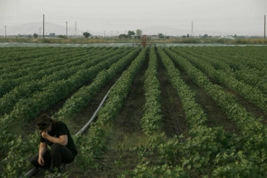 Με πόσα χρήματα θα ενισχυθούν οι νέοι αγρότες