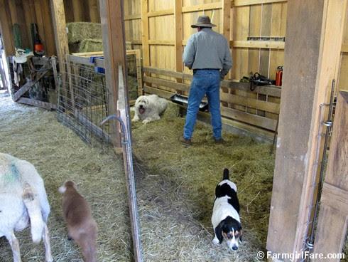 this week's Friday farm fix 7 - FarmgirlFare.com