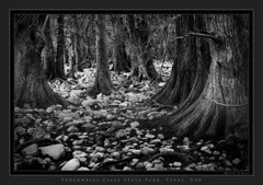 Forest and stones
