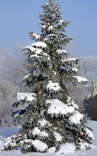Frozen-Fog-7_edited-1