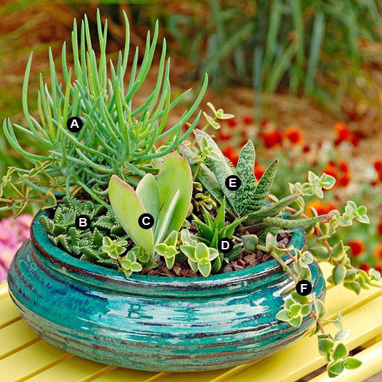 Tabletop succulent dish garden