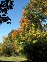 Foliage_101108b