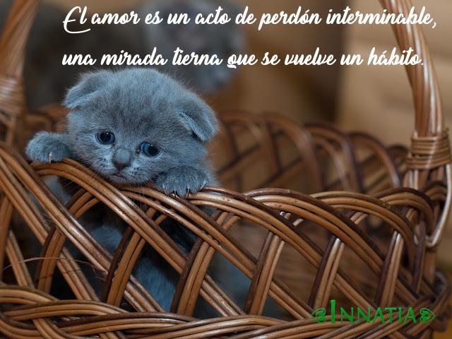 Imagenes De Animales Con Frases Graciosas Tiernas De Amor Y Mas