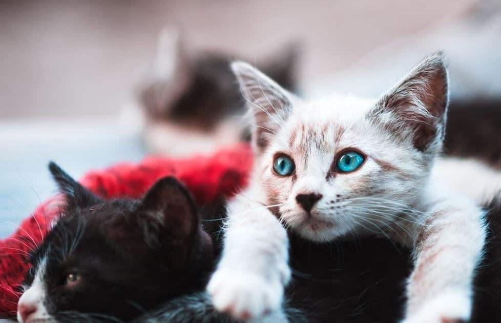 Nama Kucing Oren Jantan 81021 Nama Untuk Kucing Comel Lucu Dan Unik