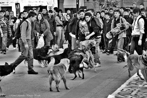 Santiago de Chiler, junta perruna by Alejandro Bonilla