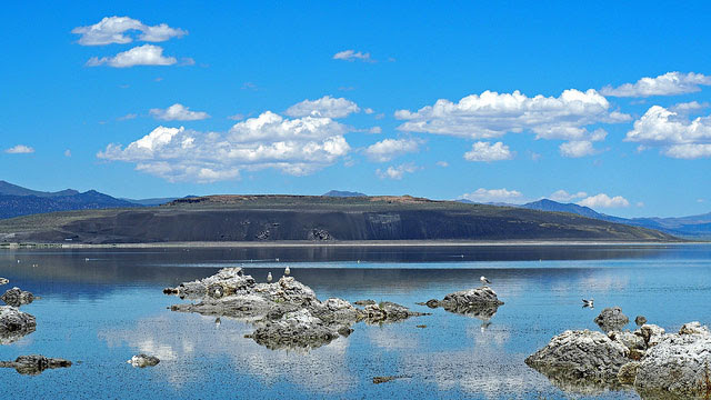 California gulls             at the Old Marina in Mono Lake, California. Black Point             pictured in the distance. --