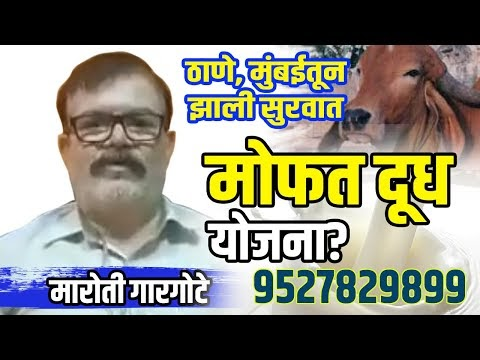 Desi Cow Milk In Mumbai | Gir Cow Milk in Thane| A2 Milk At Doorestep| F...