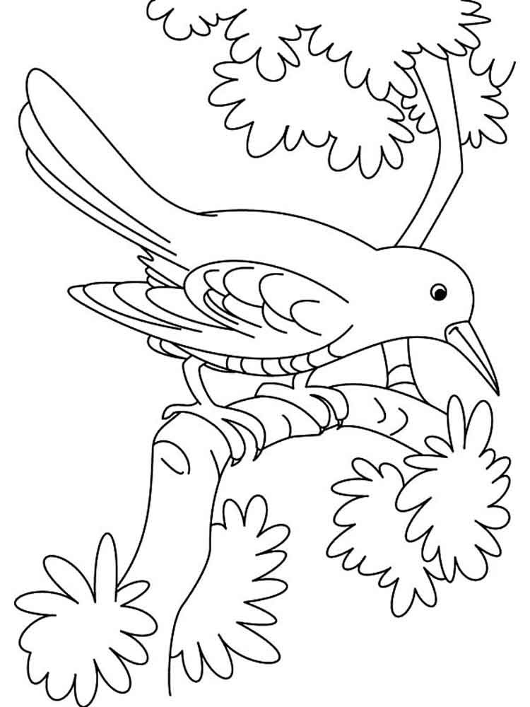 Cuckoos birds coloring pages 2