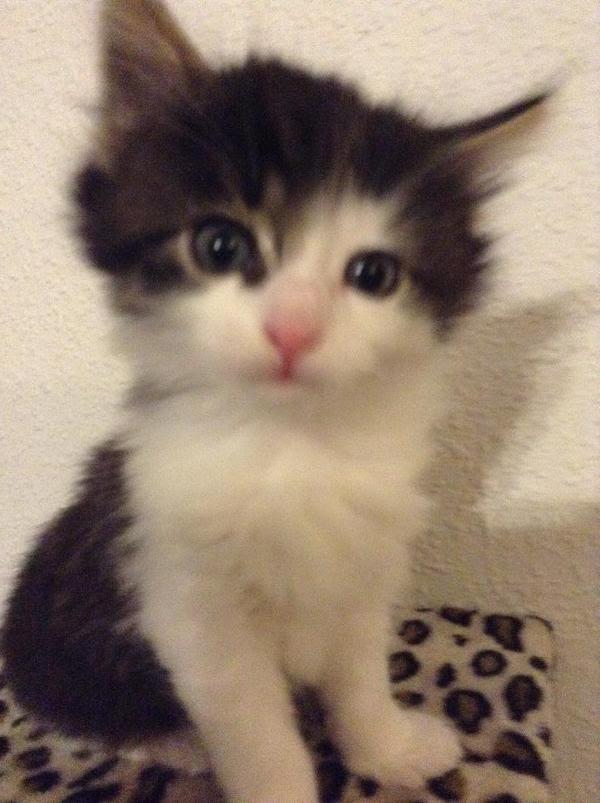 3 Süße Katzenbabys zu verkaufen in Bietigheim-Bissingen ...