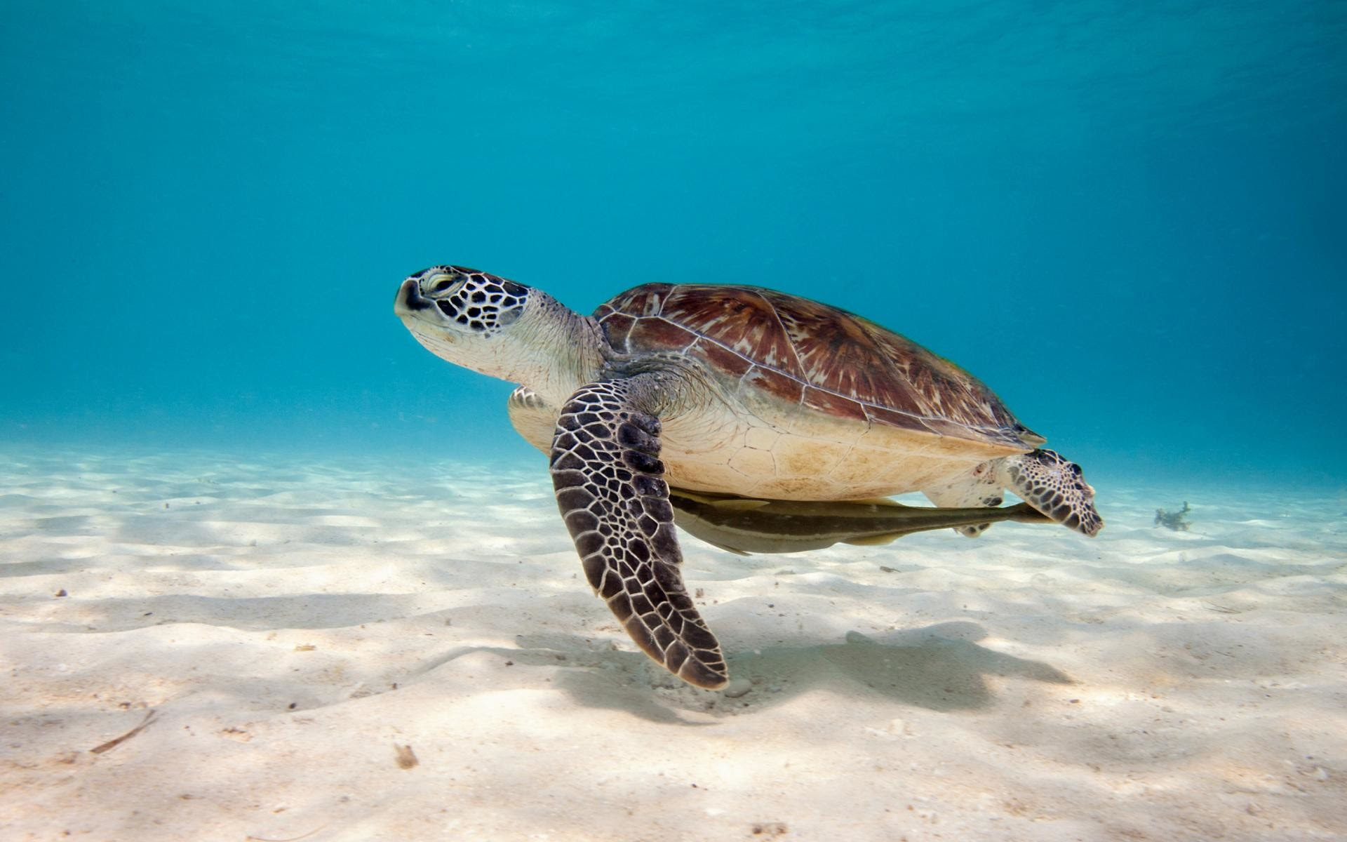 Sea Turtle Wallpaper Backgrounds 55 Images