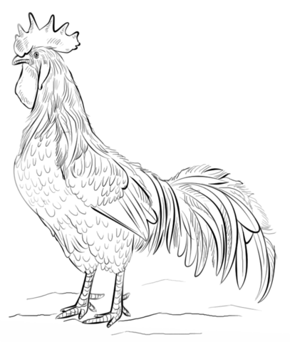 Brown Leghorn rooster coloring page  Free Printable Coloring Pages